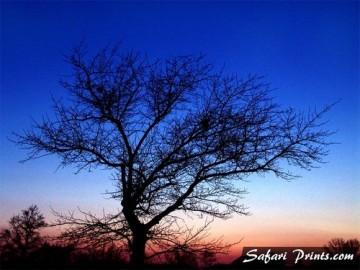 Fall Tree Silhouette