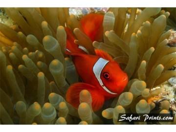 Dongala Nemo Lounging