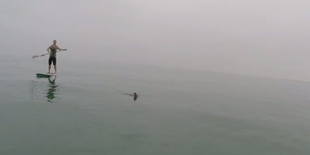 Two Ambitious Paddlers in California Went Out Searching for 10 Great White Sharks and Came Back With This