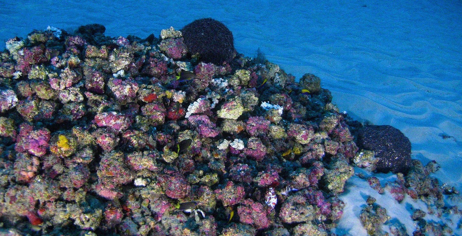 First Photos of New Amazon Coral Reef System Released